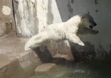 Загадочная история Белого Медведя